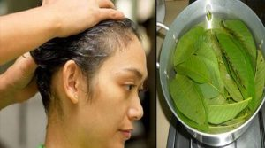 Guava Leaves for Hair Loss